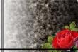 玫瑰小相框