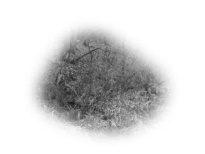 清新淡雅黑白素材图