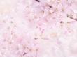 绚丽的花蕾背景--非常漂亮的